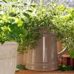 Organic Hopper Remedy