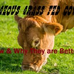 Why Grass Fed Beef is Better