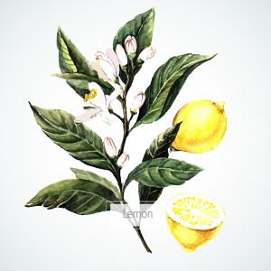 Natural Beauty Hacks - Lemons